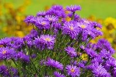 Wild field flowers in park Stock Photos