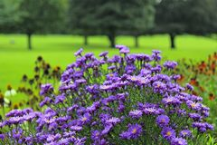 Wild field flowers in park Royalty Free Stock Photography