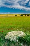 Wild field with flowers and trees stock photography