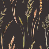 Wild field grass pattern. Beautiful seamless pattern with hand drawn watercolor wild field grass Stock Photography