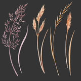 Wild field grass set. Beautiful set with hand drawn watercolor wild field grass Stock Photos