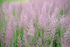Wild field of grass on sunset background.  stock photos