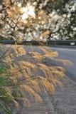 Wild field of grass on sunset Royalty Free Stock Photo