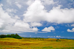 Wild field of Hawaii Royalty Free Stock Images
