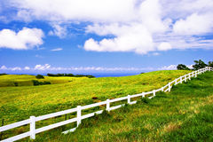 Wild field of Hawaii Stock Photography