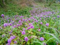 A wild field, with a purple flower. royalty free stock photography