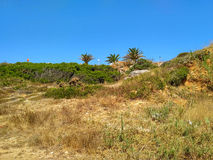 Wild fields near Cabo Carvoeiro in daylight, Peniche Stock Photography