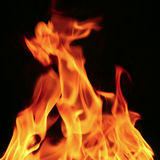 Wild fire Stock Images