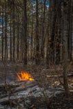 Wild Fire in Arizona Royalty Free Stock Photos
