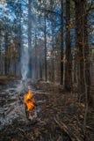 Wild Fire in Arizona Royalty Free Stock Photo