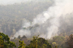 Wild fire ,Thailand Royalty Free Stock Photo