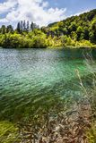 Wild fish swim in a forest lake with waterfalls. Plitvice, National Park, Croatia royalty free stock photography
