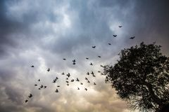 Wild flock of birds in cloudy sky stock photos