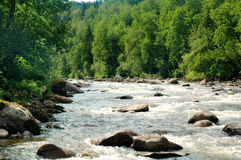 wild flod Royaltyfri Bild