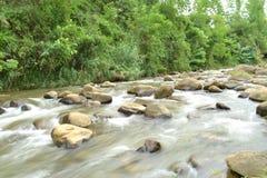 Wild flod Arkivfoton