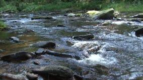 Wild flod lager videofilmer