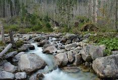Wild flod Royaltyfri Foto