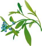 Wild flower. Blue wild flower, vector graphics stock illustration