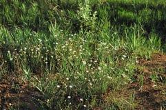 Wild flower Stock Photo