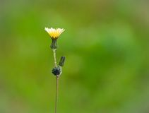 Wild flower. In a green country Royalty Free Stock Photo