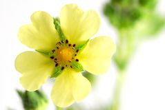 Wild Flower Stock Photos