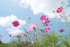 Wild flower. And blue sky, sunny day Royalty Free Stock Photography