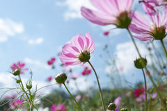 Wild flower. Pink wild flower on a sunny day Stock Images