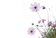 Wild flower Royalty Free Stock Photos