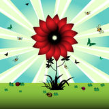 Wild flower. Colorful illustration with red flower, small butterflies, bees, ladybirds and green clovers Royalty Free Stock Photography
