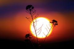 Wild flower against big sun Stock Images