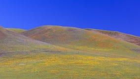 Wild flower at Antelope Valley Stock Photos