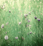 Wild flower art print on paper. Background with text space Royalty Free Stock Photo