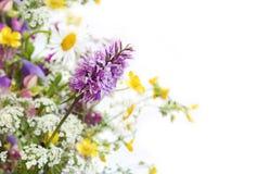 Wild flower. Stock Photo