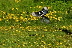 Wild Flower and the bird. Bird landing on the yellow flowers Stock Photos