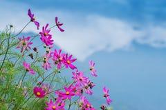 Wild flower at Borong Village, Sikkim, India Stock Photo