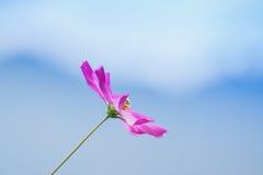 Wild flower at Borong Village, Sikkim, India Stock Photography