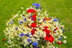 Wild flower bouquet . Wild flower bouquet with poppies daisies and cornflowers. Wild flowers  on green background Royalty Free Stock Photos