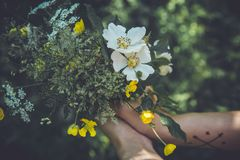 Wild flower bouquet Royalty Free Stock Photography