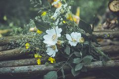 Wild flower bouquet Royalty Free Stock Image