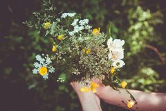 Wild flower bouquet Royalty Free Stock Images