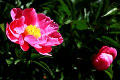 Wild flower. The bright and colorful flowers home Royalty Free Stock Photography