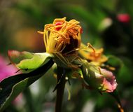 Wild flower. The bright and colorful flowers home Stock Photography