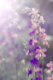 Wild flower closeup backlit Stock Photos