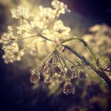 wild flower in the drops of dew on a sunny morning royalty free stock photos