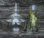 Wild flower essential oil. Herbal medicine. Antirrhinum flower essential oil on wooden background. Herbal medicine. Naturopathy stock photo