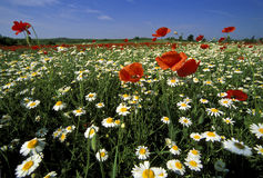 Wild flower field stock photo