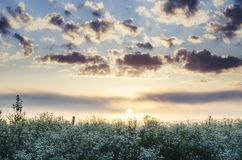 Wild flower field in spring at sunrise stock images