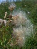 A wild flower. Stock Photos