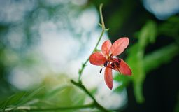 Wild flower in full blossom royalty free stock images
