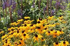 Wild flower garden Royalty Free Stock Image